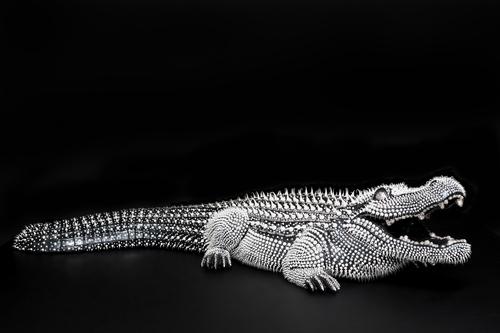 Crocodile Noir Nacre, 2020 (3,20m)