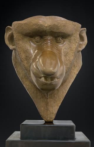 Nasique singe