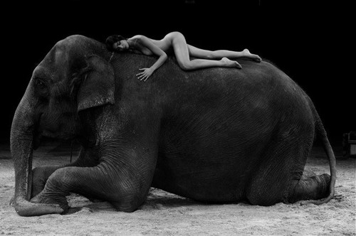 Beautiful Eva & the elephant