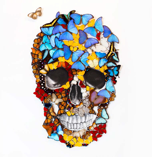 Butterfly Skull Face Trip